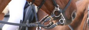 Choisir un bon mors pour votre cheval